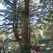 El-Corte-de-Madera-Creek-2012-07-08