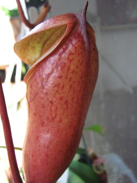 Creepy pitcher