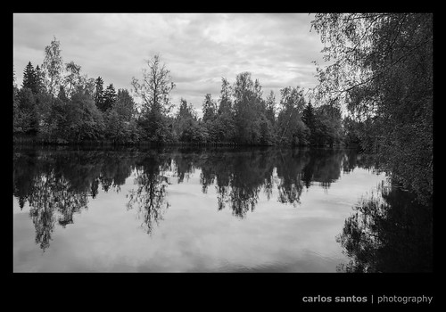trees summer blackandwhite bw nature forest canon finland landscape hämeenkyrö blackwhitephotos canon5dmarkiii grury