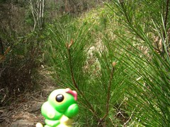 Caterpie in Asago, Hyogo 6 (Takeda Castle Remains)