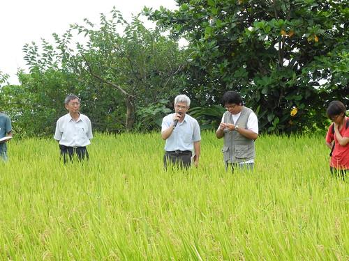 花蓮區農業改良場由場長黃鵬(左)領隊,支援豐濱水梯田復耕。圖中為課長宣大平,右為林宣佑。