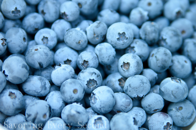 Blueberry Picking-023.jpg