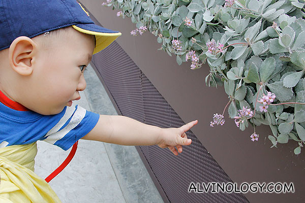Asher pointing out a small violet flower
