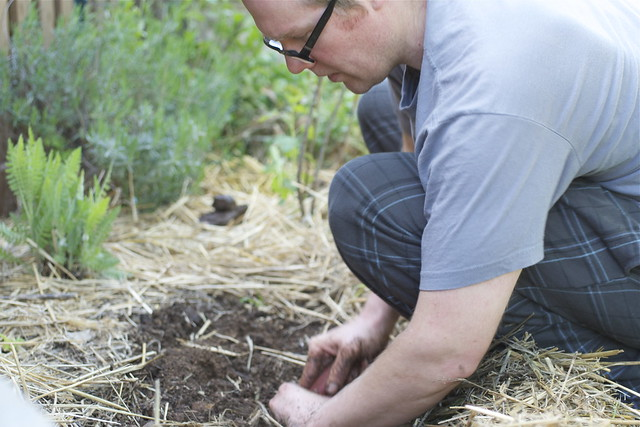 Aaron planting seedlings with yarrow, lavender and currants behind him