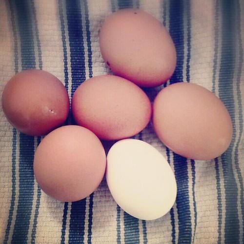time for some egg salad