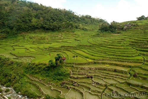 Dakkitan Rice Terraces in Hungduan, Ifugao