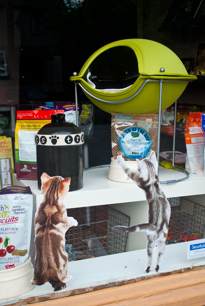365-336 Cat Capsule