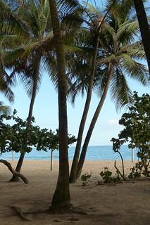 Image of La Playa @ Ocean Park Ocean Park Beach near San Juan. beach puertorico sanjuan palmtree