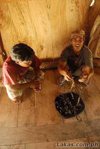 Kuya Alberto showing to me how the gayuma works in the native house of Sitio Awa, Barangay Abatan, Hungduan, Ifugao