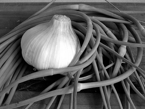 Garlic embraced by scapes
