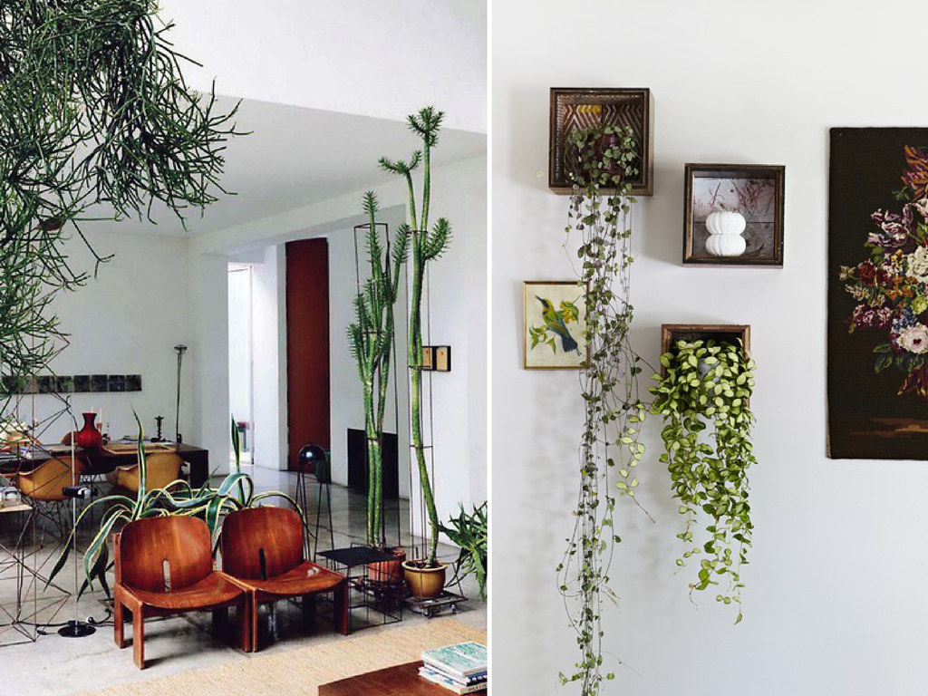 Indoor Plant Inspiration A Pair A Spare