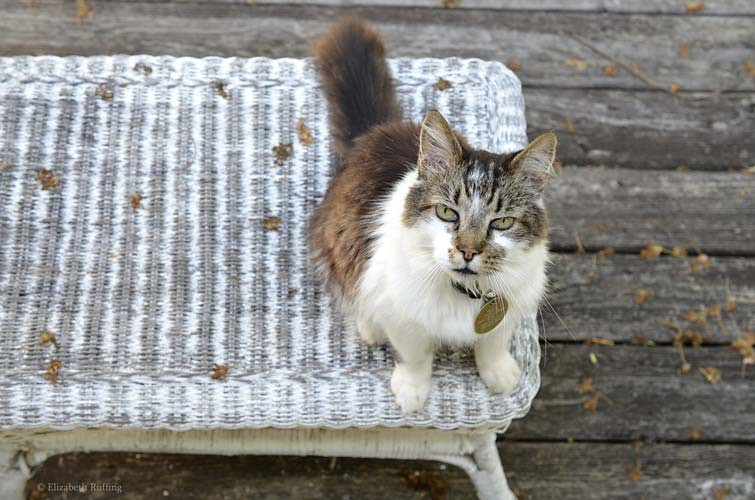 Tabby and white cat, by Elizabeth Ruffing