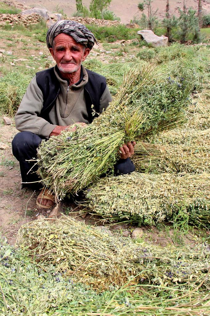 Meet your Wheaties