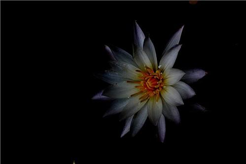 IMG_0814,dark,sm by Flashback'r