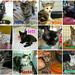 June adoptions by Goathouse Refuge