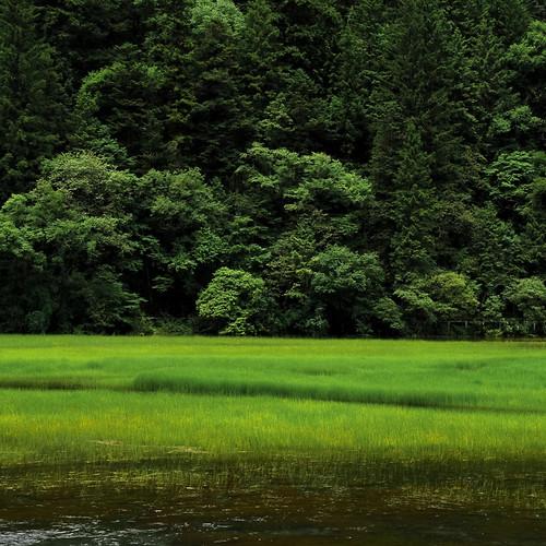 無料写真素材, 自然風景, 田園・農場, 森林, 緑色・グリーン