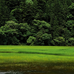[フリー画像素材] 自然風景, 田園・農場, 森林, 緑色・グリーン ID:201207122000