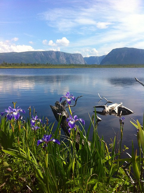 Flowers and Western Brook Pond