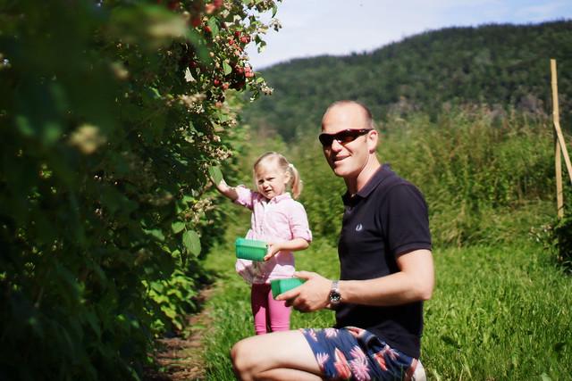 Mille plukker bringebær på Vesre Frogner gård sammen med pappa, Per-Espen.