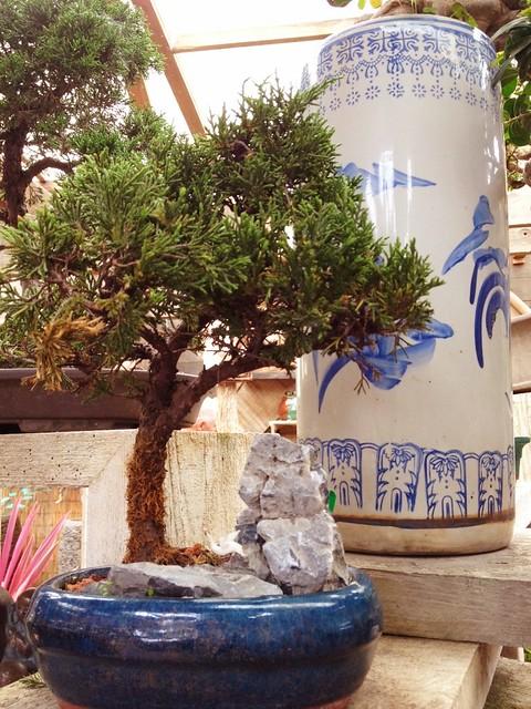 Zen Garden-Bonsai