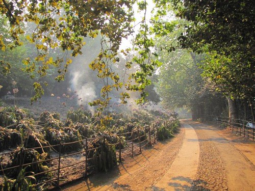 14-Quinta do Palheiro Ferreiro-19.07.12