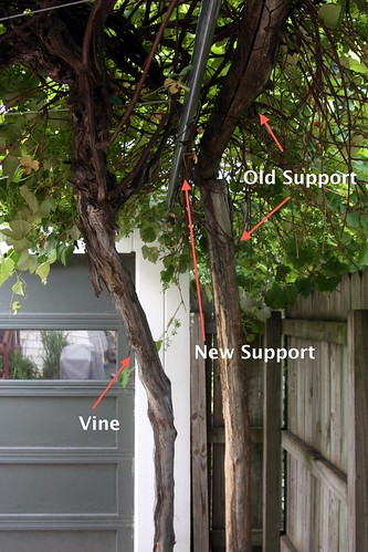 Backyard Grape Vine Trellis