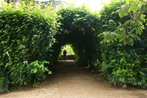 Hornbeam Tunnel at Hidcote