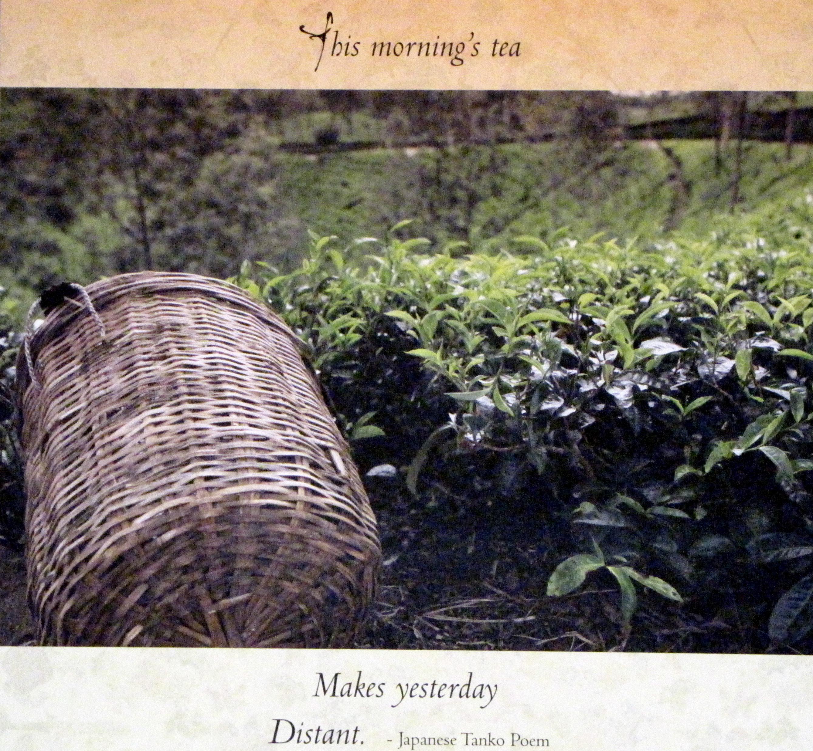Sereni-Tea August