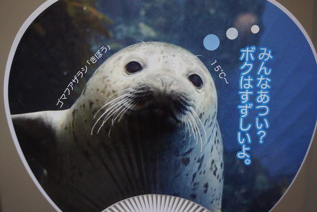 _DSC1279.JPG