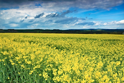 uk england english yellow rural landscape countryside scenery day cloudy farming crop british crops blueskies colourful agriculture malton northyorkshire stormclouds oilseedrape canon1740 britiain leendgrad canon5dmk3 markmullenphotography kennythorpe