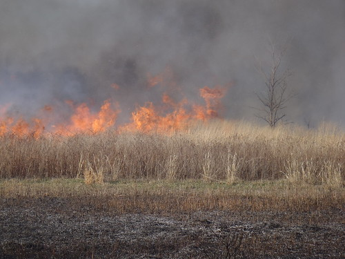Fire in the Tallgrass Prairie