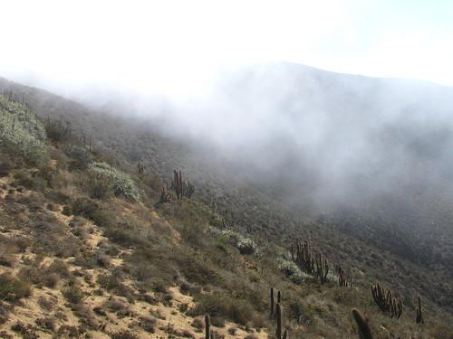 Neblina antes de llegar al Bosque Fray Jorge