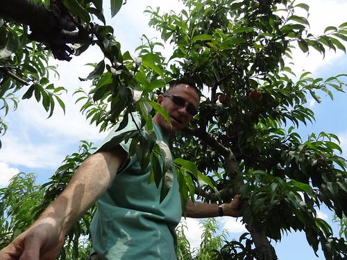 Peach Picking June 2012 (21)