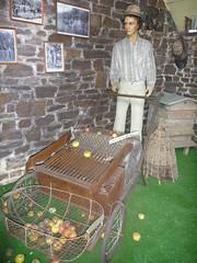 Traditional apple harvester, Cider Farm, Saint-Jean-des-Champs