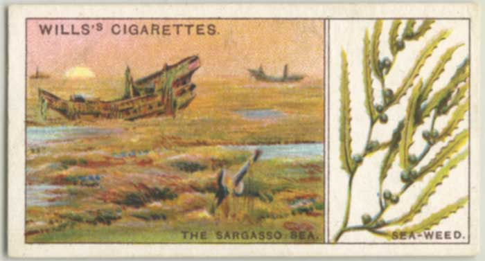 1922 Wills's Do You Know Sargasso Sea
