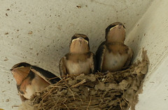 Well boys - looks like we've outgrown the nest, and somebody's gonna have to go. Any volunteers??