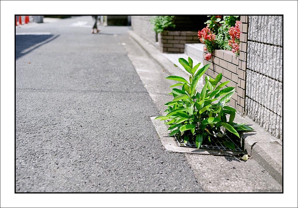 2012-05-05-_377_Scan001_00738-Edit.jpg