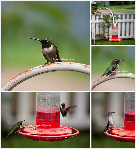 Humming Birds by bford13