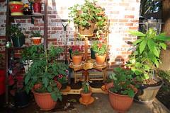 Reba's Plant Stand