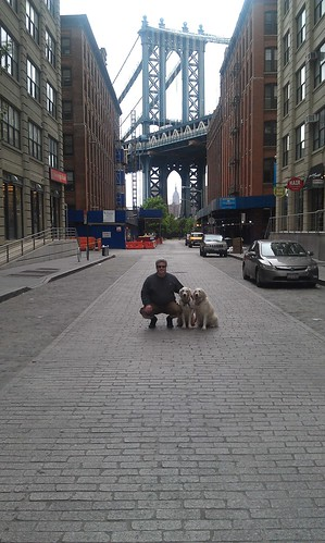 Iconic DUMBO Photo Dogs — 4 June 2012 — The Final Edition