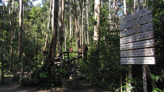 Several Rules on Orangutan Feeding Site