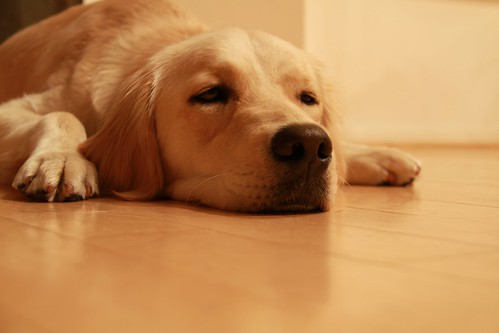 183/366 Dog-tired