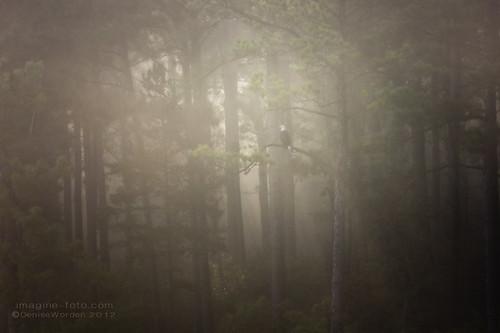 morning trees summer mist lake fog canon nc baldeagle jordanlake imaginefotocom naturearttnc12