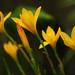 flora by samitsinha