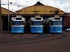 Three trams