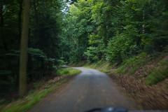 Petite route de forêt