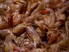 shrimp-shells-790-xxx
