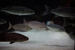 Fluviário de Mora (Mora River Aquarium)