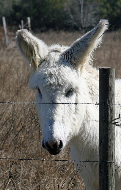 Donkey at the Fence