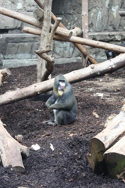 monkey at Antwerp Zoo